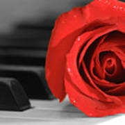 Rose And Piano Poster