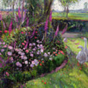Rose Bed And Geese Poster by Timothy Easton
