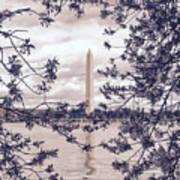 Rose Blossom Monument Poster
