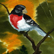 Rose Breasted Grossbeak Poster