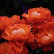 Rose Cluster Poster