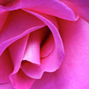 Rose Detail 1 Poster