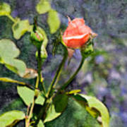 Rose Elegance Art Poster