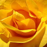 Rose Flower Orange Yellow Roses 1 Golden Sunlit Rose Baslee Troutman Poster