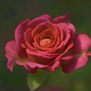 Rose Fragrance Poster