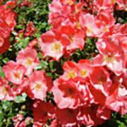 Rose Garden Pink Roses Botanical Landscape Baslee Troutman Poster