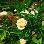 Rose Gardens Poster