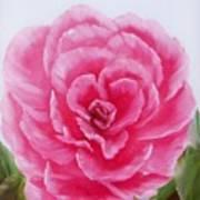 Rose Poster by Joni McPherson