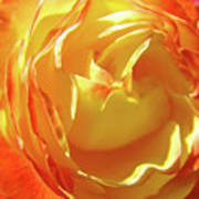 Rose Orange Yellow Roses Floral Art Print Nature Baslee Troutman Poster