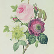Rose Poster by Pierre Joseph Redoute