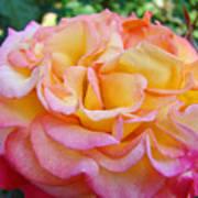 Rose Pink Yellow Rose Flower 2 Rose Garden Giclee Prints Baslee Troutman Poster