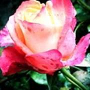 Rose Solitude  Poster
