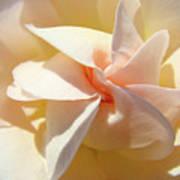 Rose Spiral Flower Art Prints Peach Rose Floral Baslee Troutman Poster