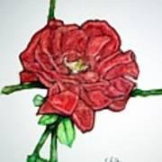 Rose Study No 1 Poster
