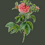 Rose101 Poster
