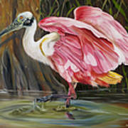 Roseate Spoonbill In A Cypress Swamp Poster