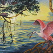 Roseate Spoonbills Among The Mangroves Poster