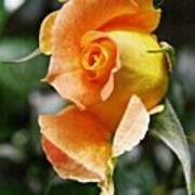 Rosebud Opening Poster