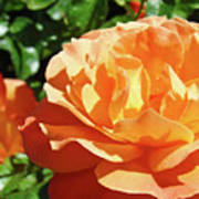 Roses Art Prints Orange Rose Flower 11 Giclee Prints Baslee Troutman Poster
