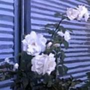 Roses De Lignes Bleues Poster
