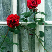 Roses In The Window Poster