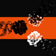 Roses Interact With Orange Poster