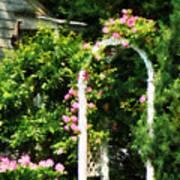 Roses On Trellis Poster
