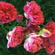 Roses Roses Poster