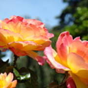 Roses Yellow Roses Pink Summer Roses 4 Blue Sky Landscape Baslee Troutman Poster