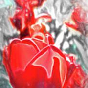 Rosy Swirl Poster