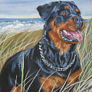 Rottweiler At The Beach Poster