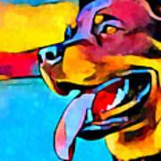 Rottweiler Poster