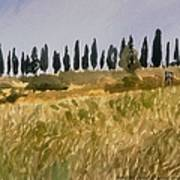 Row Of Cypress Trees, Tuscany Poster