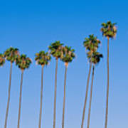 Row Of Palm Trees Poster