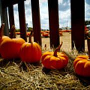 Row Of Pumpkins Sitting Poster