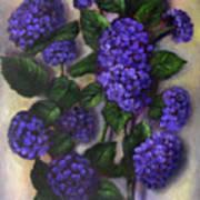 Royal Blue Hydrangea Poster
