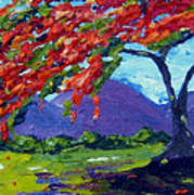 Royal Poinciana Palette Oil Painting Poster