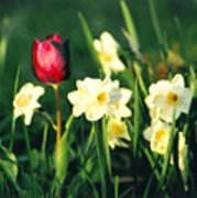 Royal Spring Poster