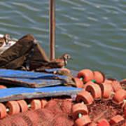 Ruddy Turnstones Perching On Fishing Nets Poster