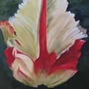 Ruffled Tulip  Poster