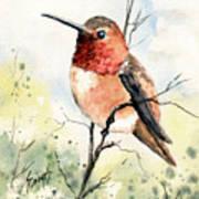 Rufous Hummingbird Poster