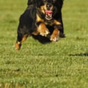 Run Dog Run Poster