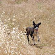 Run Puppy Run Poster