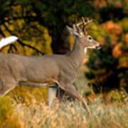 Running Buck Poster by Larry Ricker