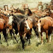 Running Free Horses IIi Poster