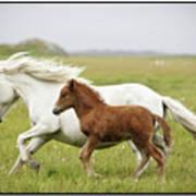 Running Horses.... Poster by Gigja Einarsdottir