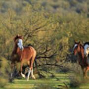 Running In The Desert Poster