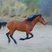 Running Wild Stallion Poster
