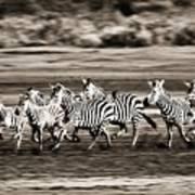 Running Zebras, Serengeti National Poster by Carson Ganci