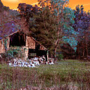 Rustic Barn In Disrepair False Color Infrared Poster